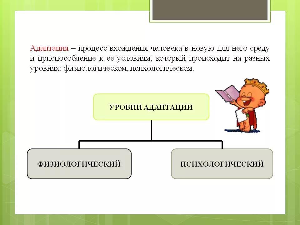 Схема уровней адаптации